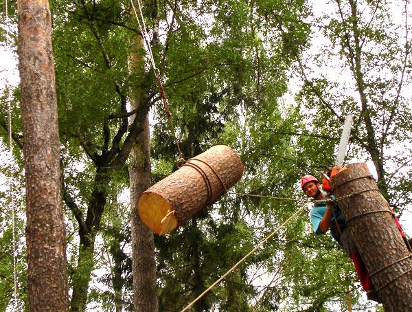 Удаление деревьев альпинистами-арбористами
