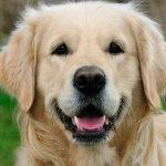 Какая порода собак самая популярная?
